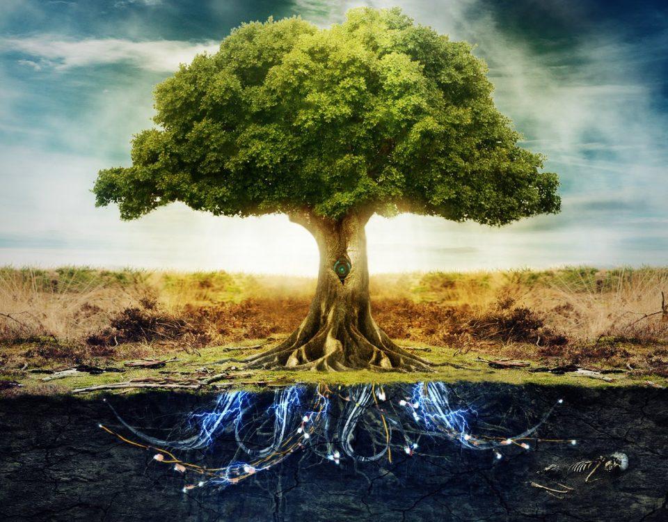 arbre Permaculture