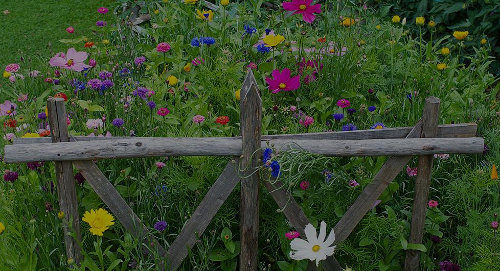 Pollénisation potager fleuri biodiversité terre permaculture