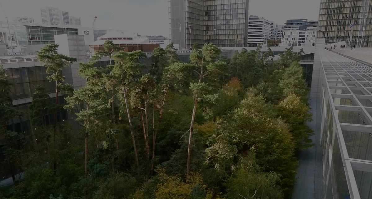 forêt urbaine en ville terre permaculture