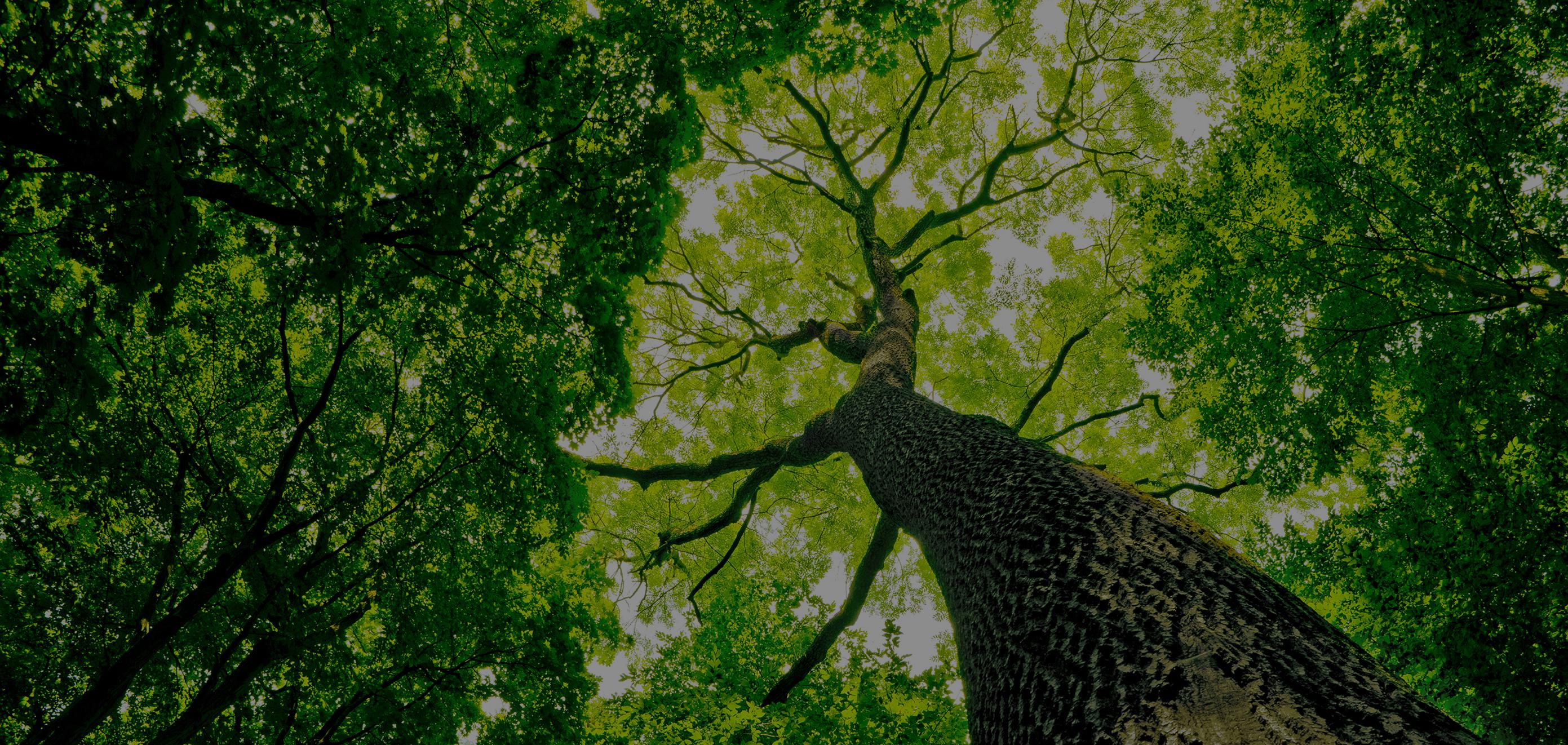 positivité carbone rétablissement climatique terre permaculture basque