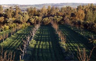 avant-apres-permaculture