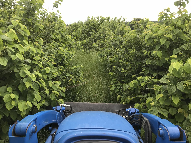 ferme rentable permaculture arboriculture silvopastorale