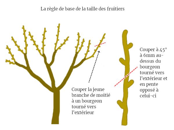 regle de base taille arbres fruitiers permaculture