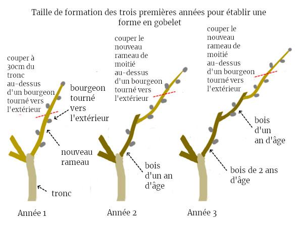 taille de formation perma arbres fruitiers